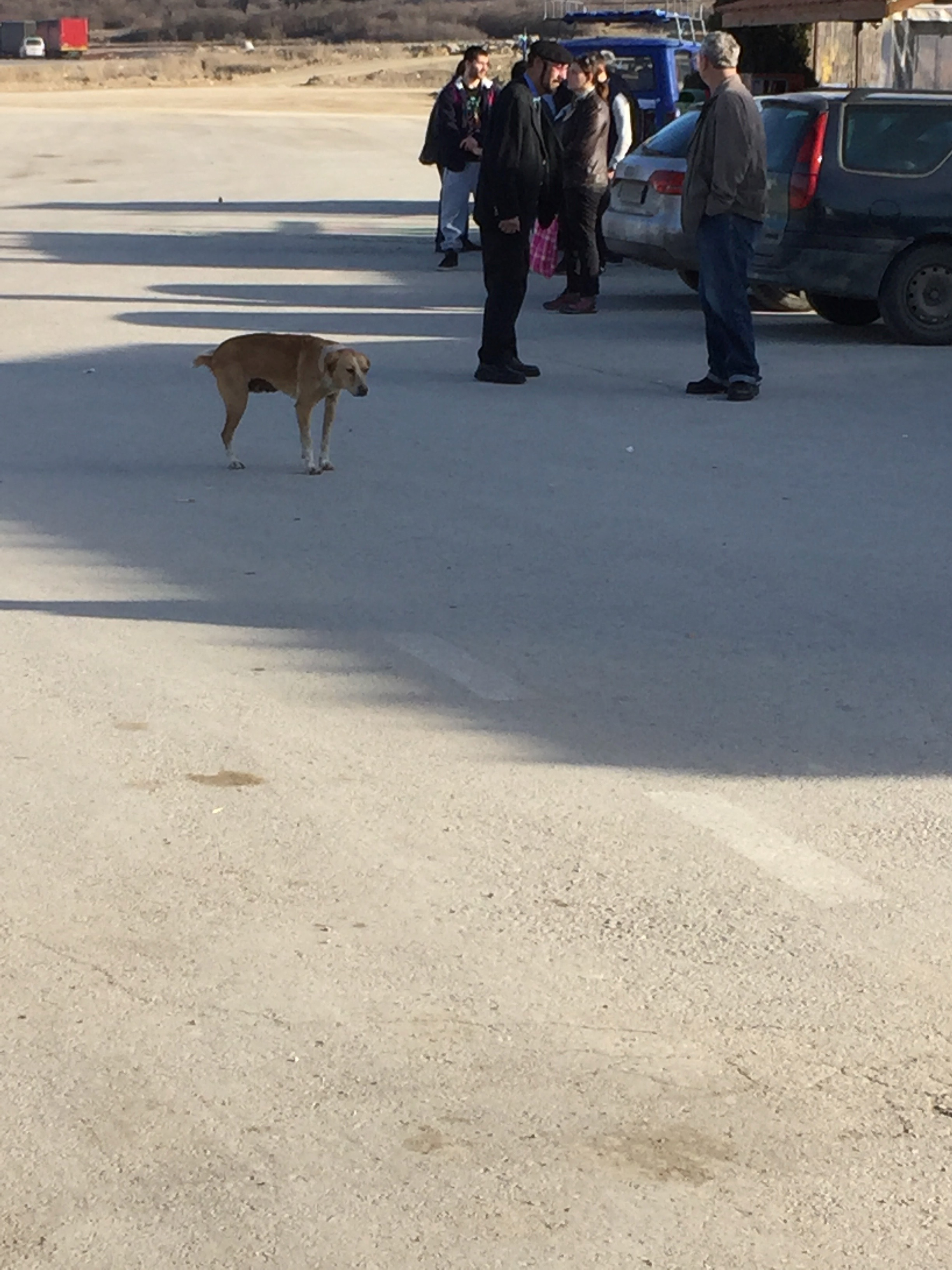 国境付近の野犬