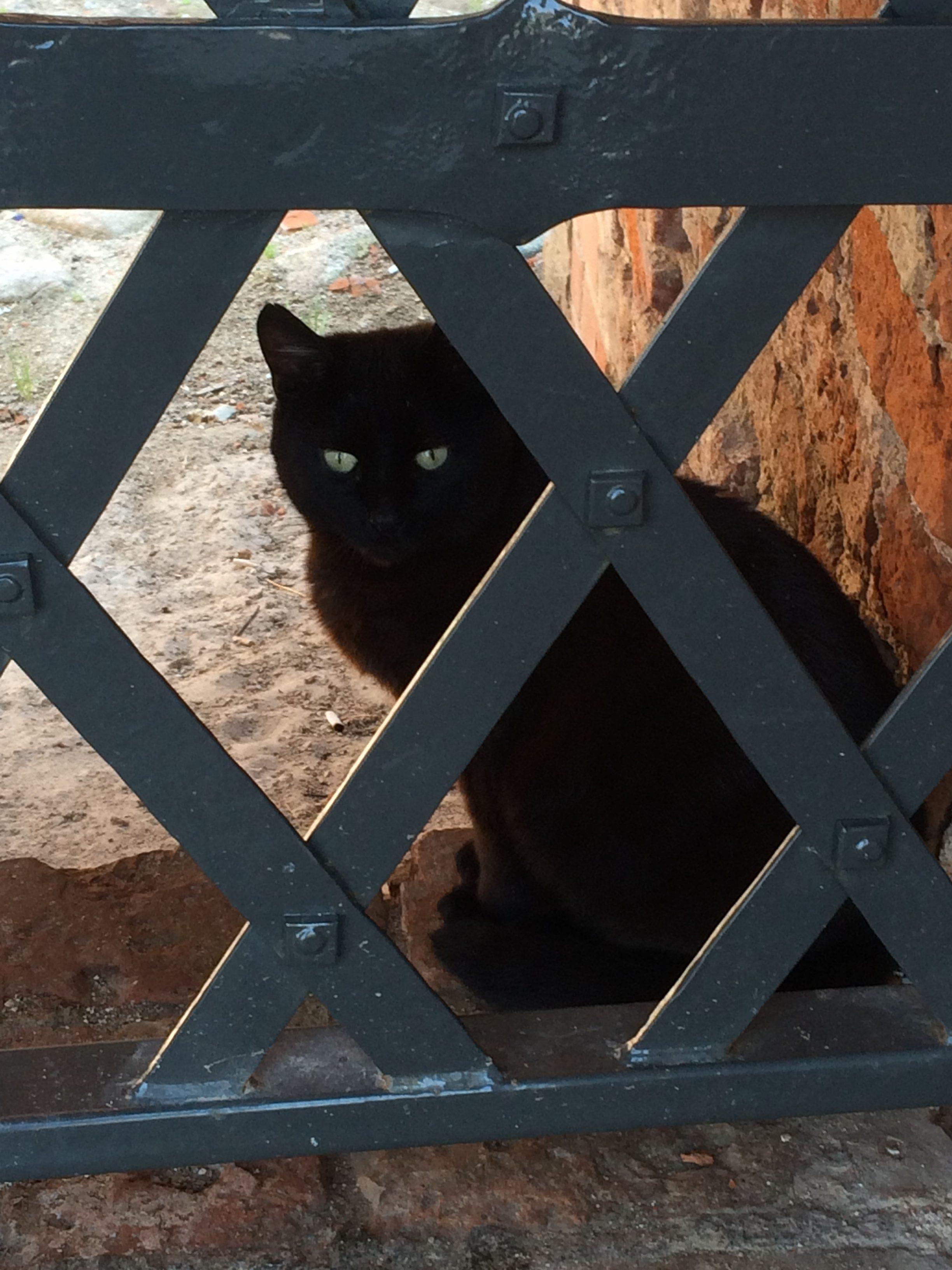 ゲティミナス城にいた黒猫